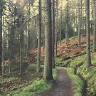 Tranquil Forest in Scotland by msangiemoon