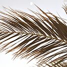 Palm Tree Leaves in Beige by PrintsProject