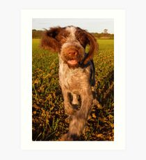 Brown Roan Italian Spinone Puppy Dog In Action Art Print
