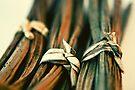 Knots by Purplecactus