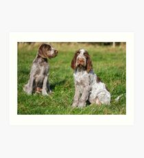 Brown Roan Italian Spinone Puppies Art Print