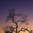 old oak, new moon by Allan  Erickson