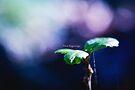 New beginings by Purplecactus