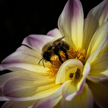 Hungry Honeybee by widdy170