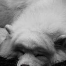 sleepy by Perggals© - Stacey Turner