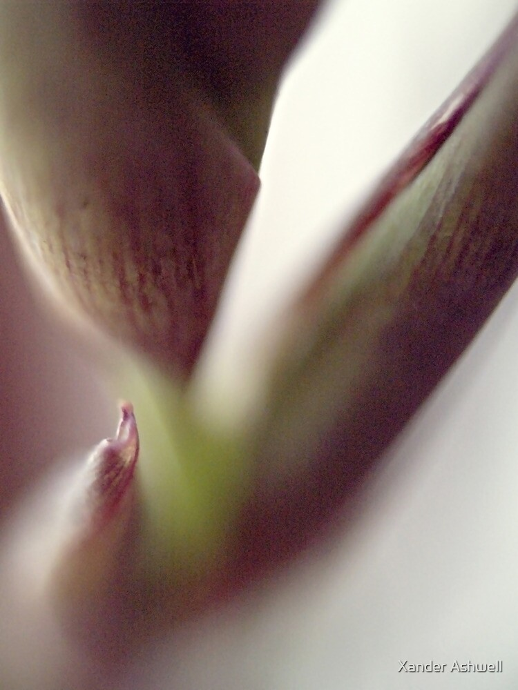 Buds appearing by Xander Ashwell