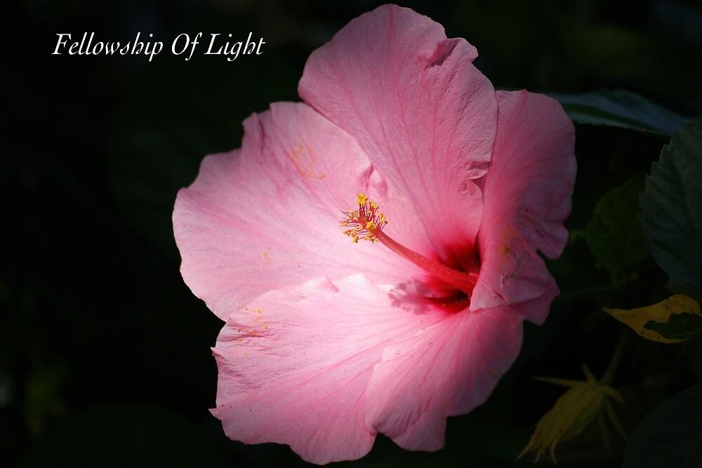 Fellowship Of Light by JpPhotos