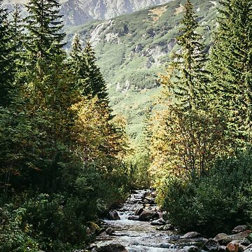River Stream In Mountain Forest by PatiDesigns