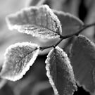 Leaves in Black and White for FM by Michelle BarlondSmith