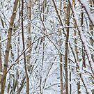 Snow in an ancient woodland by hidden-design