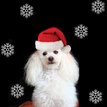 Christmas Toy Poodle  by ritmoboxers