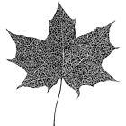 Leaf by Aleksandra Kabakova