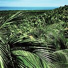 Nature palm  by MendesMay