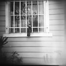 Owl Decoy, East Hollywood by joshsteich
