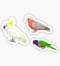 The Usual Suspects: Common Australian Backyard Parrots Pixel Sticker