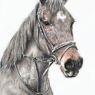 Horse study by L K Southward
