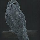 Snowy Owl by ZHField