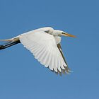 Great Egret 2014-5 by Thomas Young