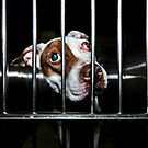 Animal Shelter Photos by Mark Ross