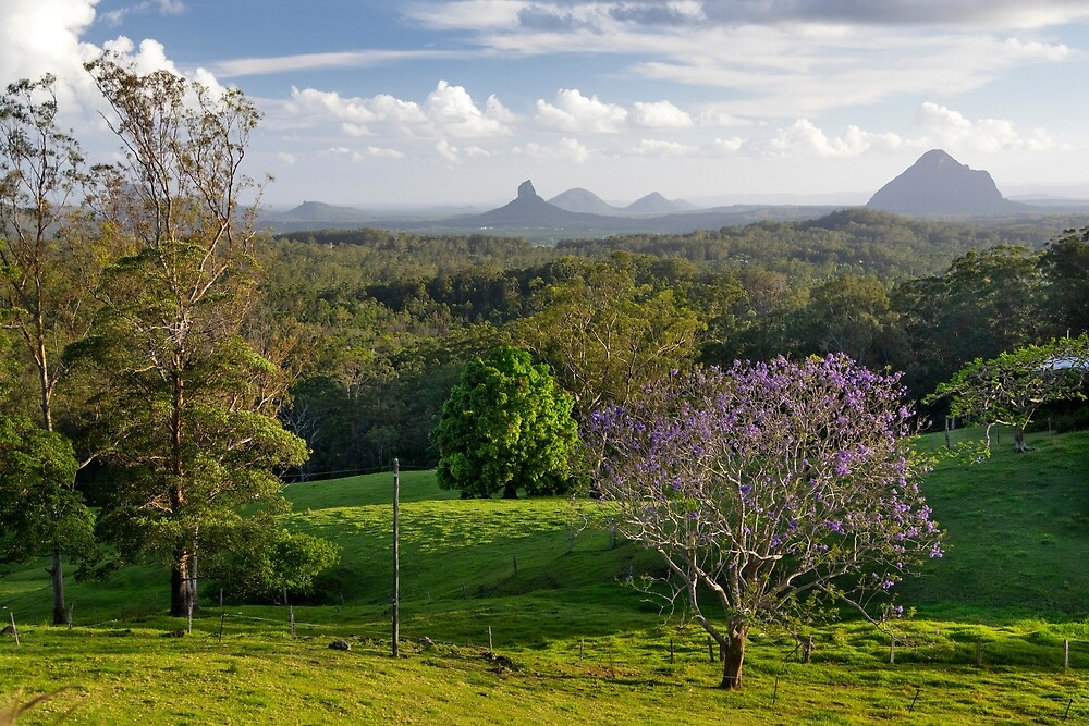 Glasshouse Mountains with Jacaranda by Andrew Goodall