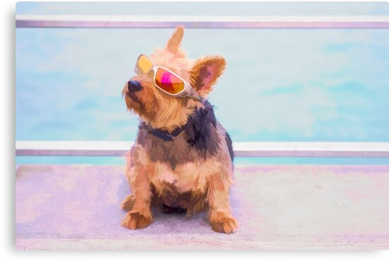 Cool Dog.... by Tracie Louise