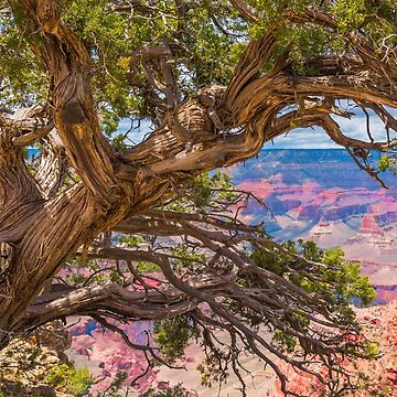 Beauty Beyond the Trees by JohnDSmith