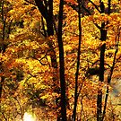 A Golden Autumn Delight  by lorilee