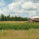 Old Red Barn by Bob  Perkoski
