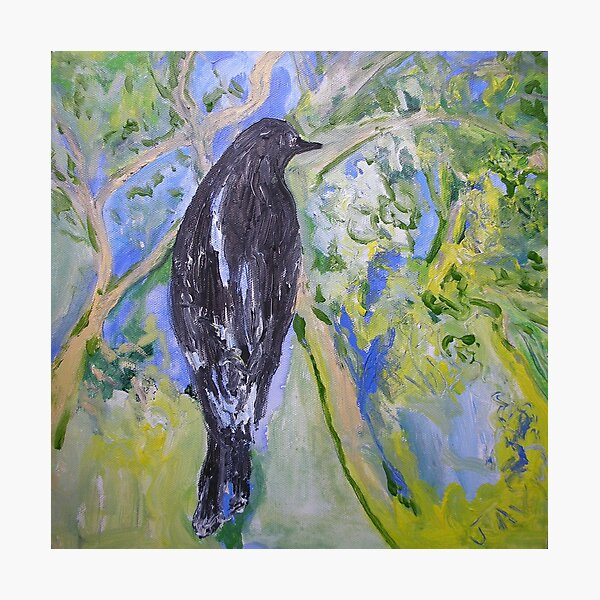 Harry's Currawong Photographic Print