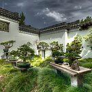 Bonsais - Chinese Garden - Sydney by Jeff Catford