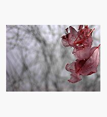 Dry flower 10 Photographic Print