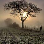 Tree by Chris Charlesworth