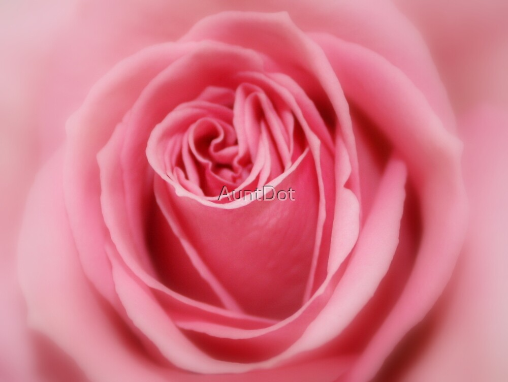 Birthday Rose II by AuntDot