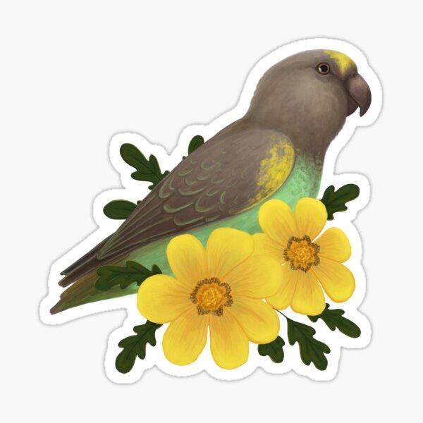 Meyer's Parrot Sticker