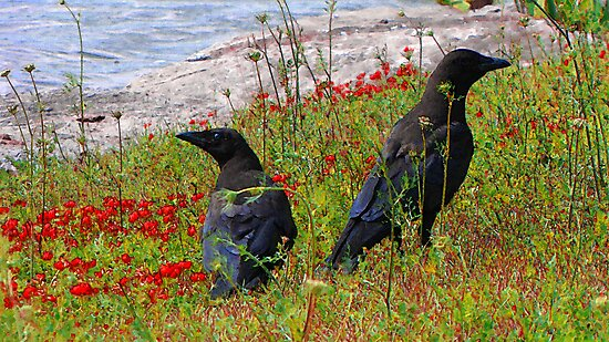 Crows by nikspix