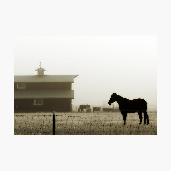 Foggy Morning in the Pasture Photographic Print