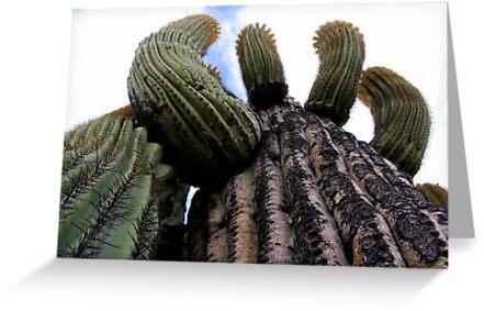 Sonoran Scenery Series ~ 1 by Kimberly Chadwick