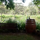 After 5 - Adelaide Hills Wine Region - Fleurieu Peninsula - South Australia by MagpieSprings
