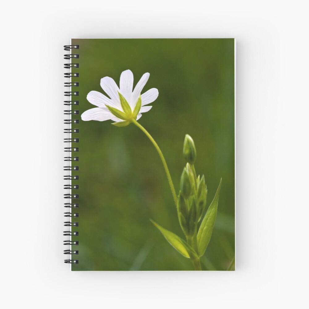 Greater Stitchwort (Stellaria palustris) Spiral Notebook