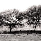 Black and white Trees by hutofdesigns