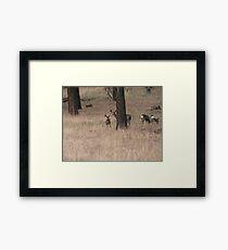 Moss Eaters Framed Print