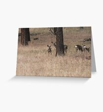 Moss Eaters Greeting Card