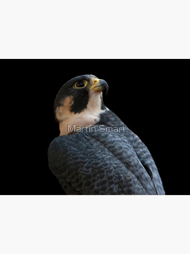 Peregrine by MartinSmart
