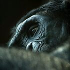 Content Bonobo resting by ensell