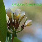 Tropical Frangipani Christmas Card by Virginia McGowan