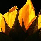 ~golden petals~ by Terri~Lynn Bealle