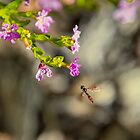 Bug approaching flowers by TJ Baccari Photography
