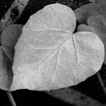 Ivy Heart by purpleelephant