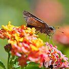 Moth Closeup by TJ Baccari Photography