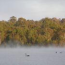 Swans Mist by Lenny36